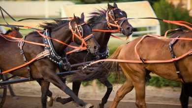 best horse racing websites